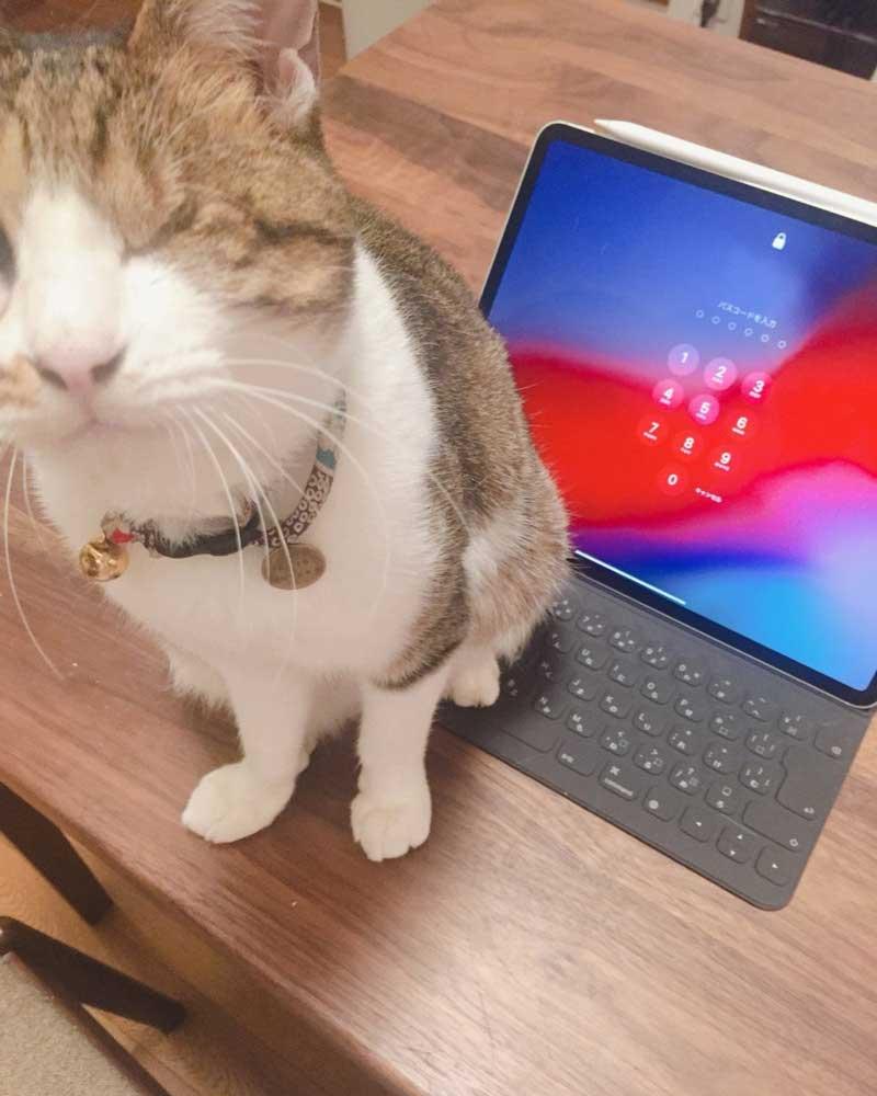 猫とipad